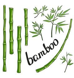 Bamboo green vector image