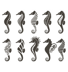 set of seahorse vector image