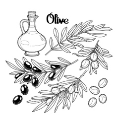 Graphic olive collection vector