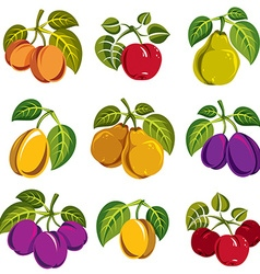 Collection of 3d simple fruits icons with green vector image