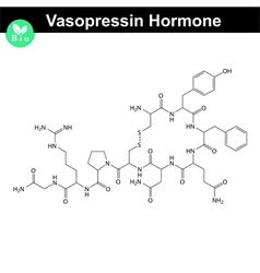 Vasopressin hormone vector image vector image