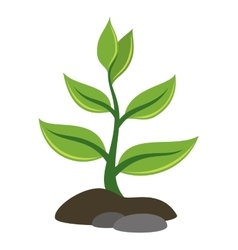 Green plant and ground vector