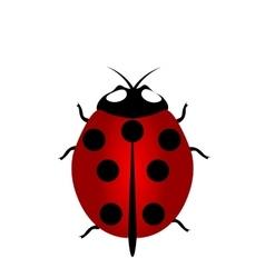 ladybird icon Red Ladybug vector image vector image