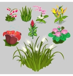Big collection of different flowers vector image vector image