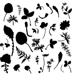 Set of herbs and leaves silhouette s vector image vector image