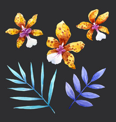 Watercolor orchid flowers set vector