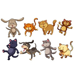 A group of playful cats and dogs vector
