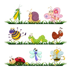 Bugs cartoon vector image