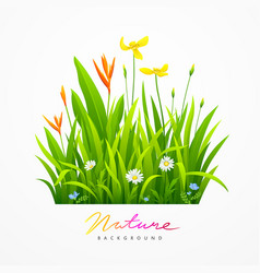 Beautiful variety of flowers with green leaves vector