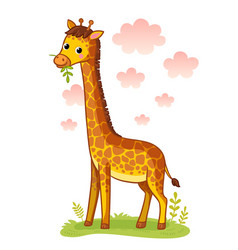 Giraffe standing on meadow and chews grass vector