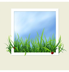 Window with grass vector