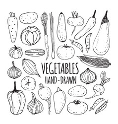 set hand drawn vegetables vector image