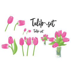 A set of pink tulip flowers vector
