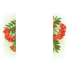 Banner with autumn rowan vector image vector image