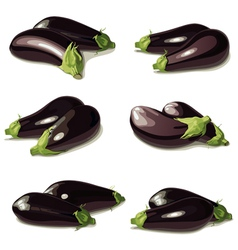 set of aubergine vector image vector image