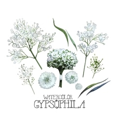 Watercolor gypsophila set vector image vector image