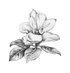 Beautiful hand-drawn monochrome flower vector
