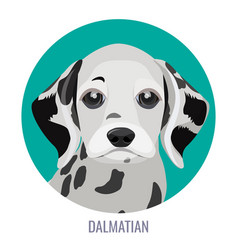 dalmatian puppy in green circle vector image vector image