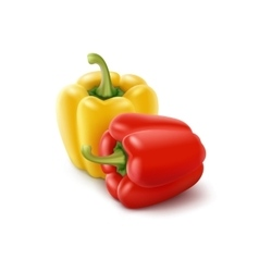 Two Yellow and Red Sweet Bulgarian Bell Peppers vector image