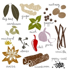 Stylized spices vector