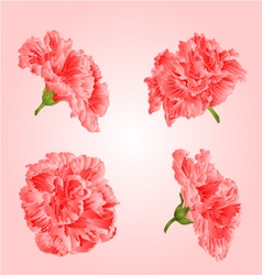Pink hibiscus flowers tropical blossoms houseplant vector