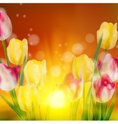 Tulip Field during Sunset EPS 10 vector image