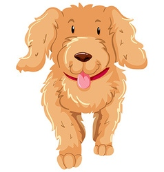 Dog with fluffy brown fur vector
