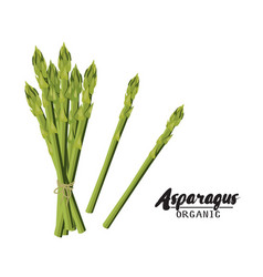 Cartoon asparagus ripe green vegetable vector