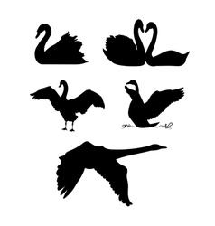 Swan silhouettes vector