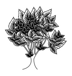 Sketch silhouette leafy tree with several leaves vector