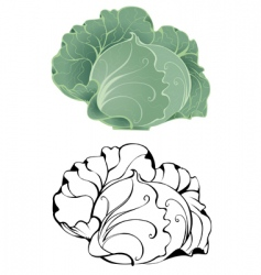 Stylized cabbage vector