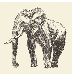 Elephant engraving hand drawn sketch vector