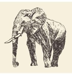 Elephant engraving hand drawn sketch vector