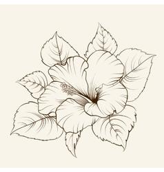 Flower of mallow vector
