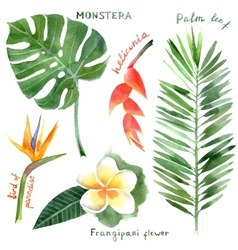 Watercolor tropical plants vector