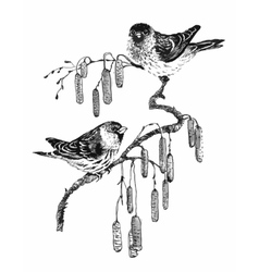 Birds on twig sketch vector