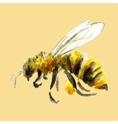 Watercolor hand drawn bee vector image