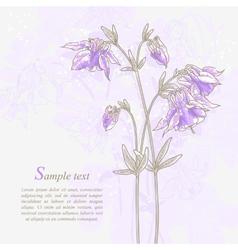 Romantic background with violet aquilegia vector image