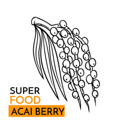 icon superfood acai berry vector image vector image