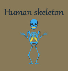 human organ icon in flat style human skeleton vector image