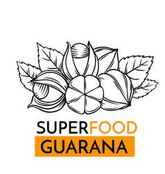 icon superfood guarana vector image