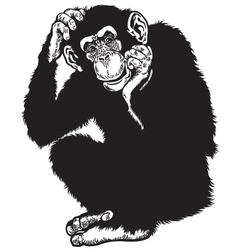 chimpanzee black white vector image