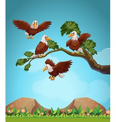 Eagles flying over the field vector image