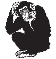 Chimpanzee black white vector