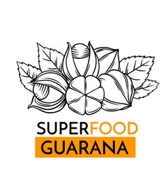 icon superfood guarana vector image