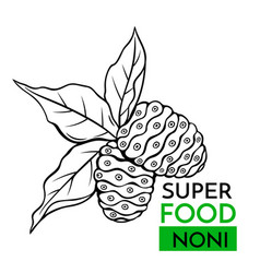 icon superfood noni vector image
