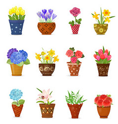 Collection of flowers planted in ceramic pots for vector