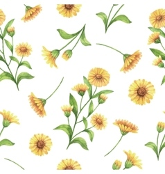 Watercolor seamless pattern with calendula vector