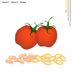Red tomatoes with vitamin c and vitamin a vector
