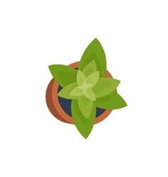 House or office plant in a flat style decoration vector